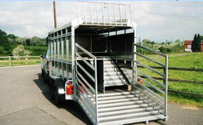 Transport de moutons
