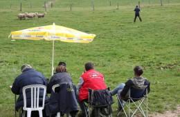 Moutons Roux-du-Valais9