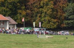 Moutons Roux-du-Valais5